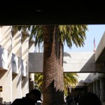 Mmmmm, warm weather and palm trees