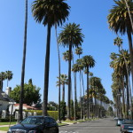 Iconic Beverly Hills palm trees