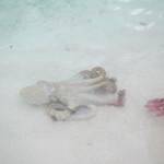 Octopus 1/2